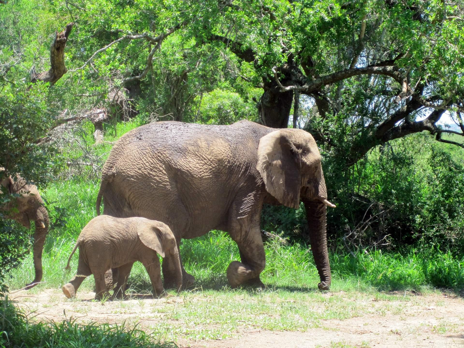 elephant conservation Compelo