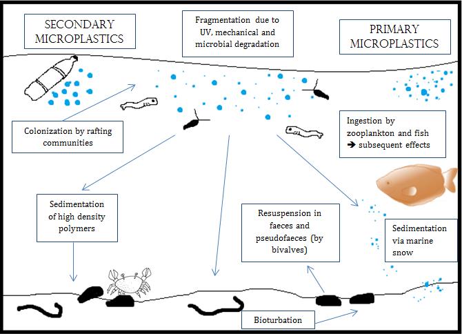 Microplastics in humans, microplastics
